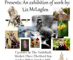 Liz McLaglen @ The Jack Pilling Art Gallery